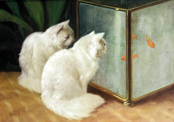 arthur-heyer-Two-persians-in-front-of-a-goldfish-tank