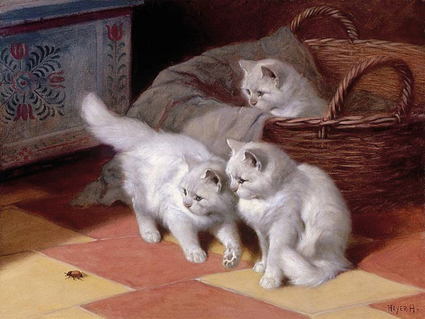 arthur heyer three white persian cats watching-a-bug